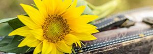 sunflower-1156539_1920_326x116
